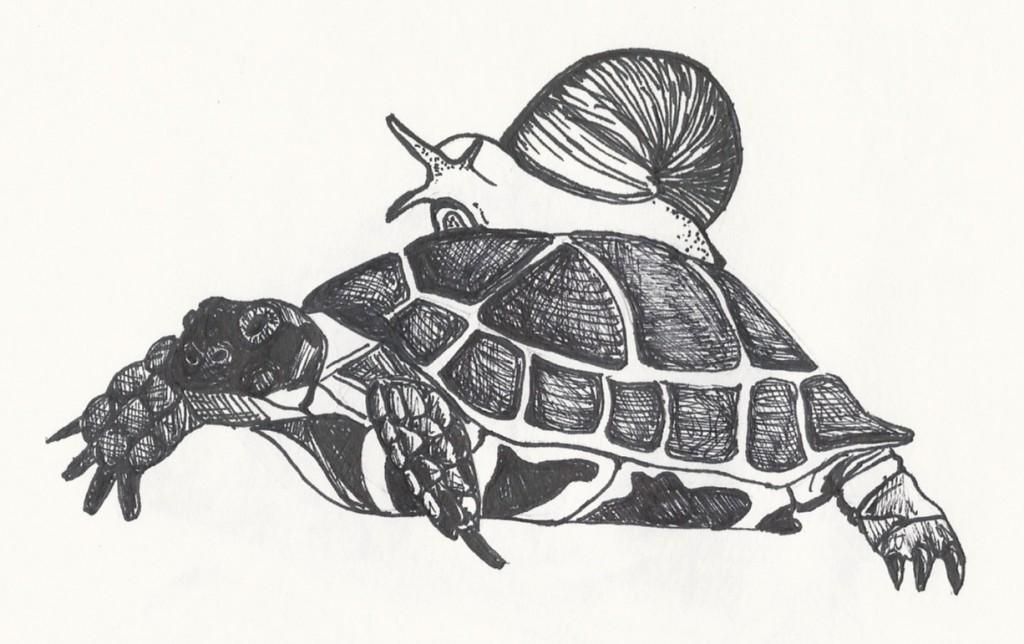 Turtle & Snail