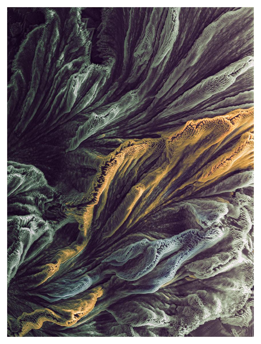 micrographie 28