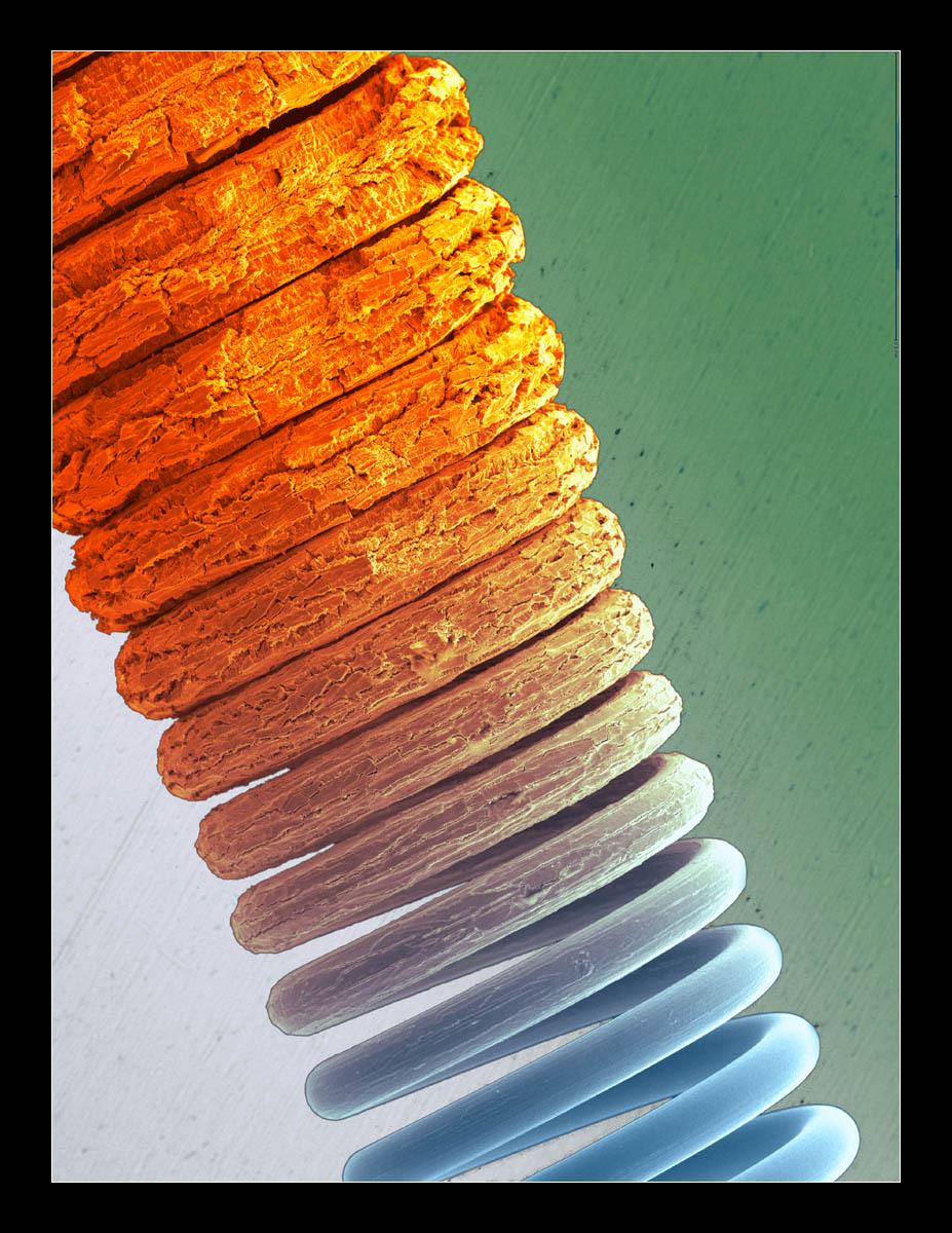 micrographie 8
