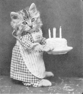 cat birthday